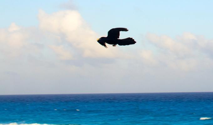 Repat/Expat in Cancun
