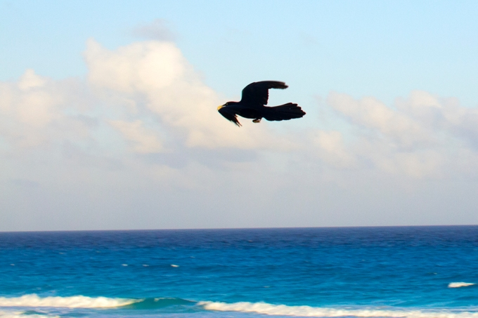 mexican-repat-expat-cancun-bird