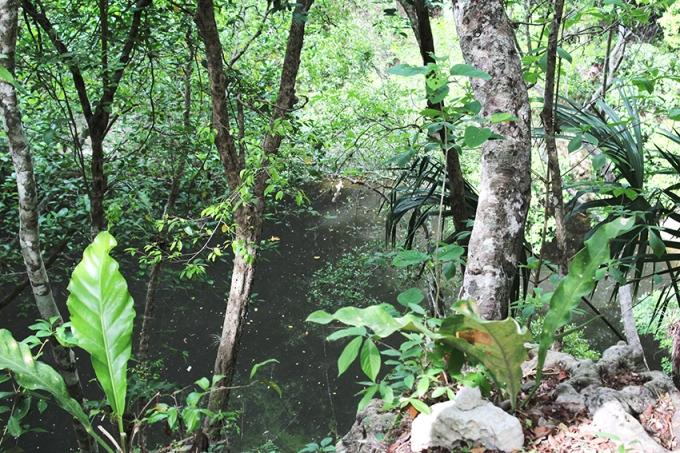 road-trip-chichen-Itza-valladolid-Cenote-Iguana