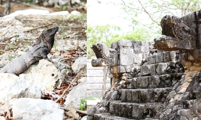 road-trip-chichen-Itza-valladolid-reptiles